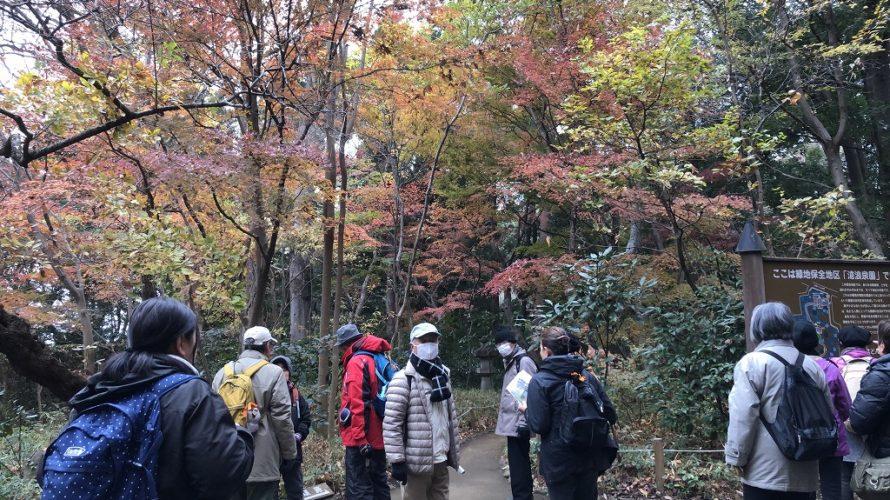 滄浪泉園と野川沿い都立公園ウォーキング ~第55回東京スポーツ祭典~